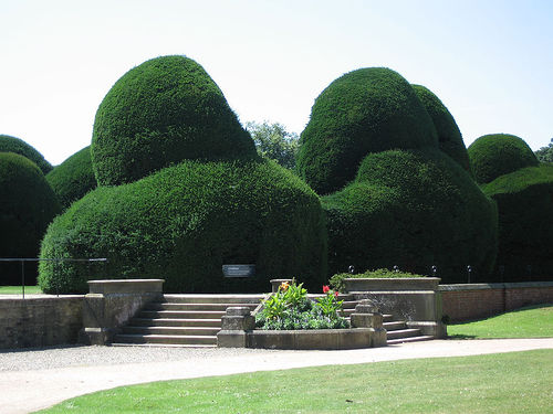 Wonderfully Awful: Your Hedges Need a Trim