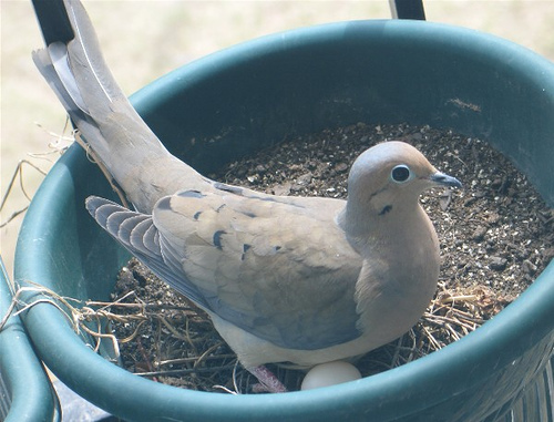 Notes from a Nester:  Something's Growing in my Nest!