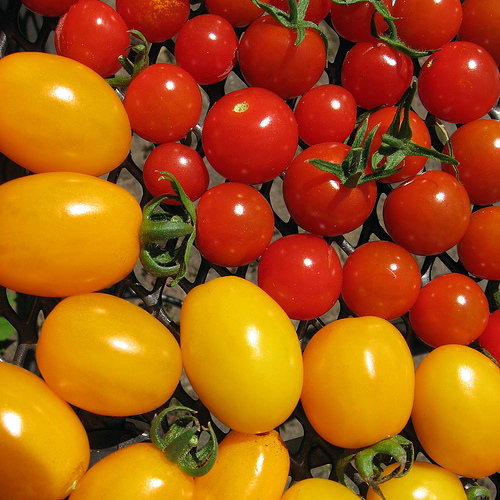 Fierce Foodie: Nice Tomatoes