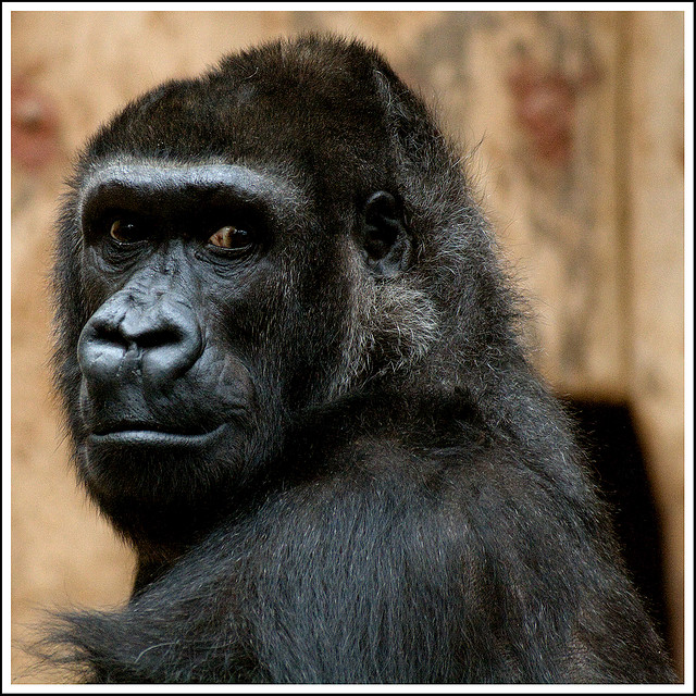 Hung Like A Gorilla: Ask Dr. Miro [What You Didn't Learn in Health Class]