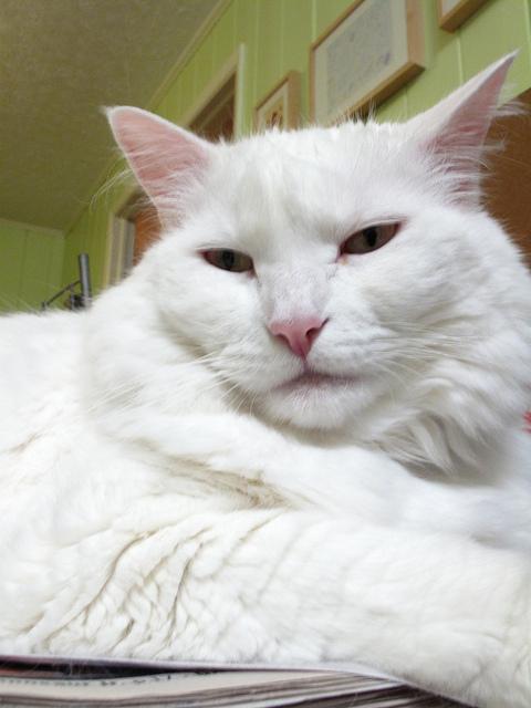 Broccoli Cat [Dork Lifestyle #28]