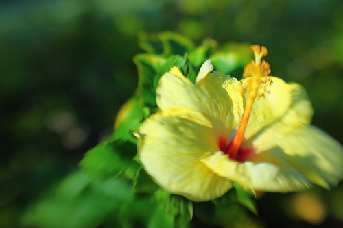 CH's Picture of the Day: Hawaii Memories 3 [Day 220]