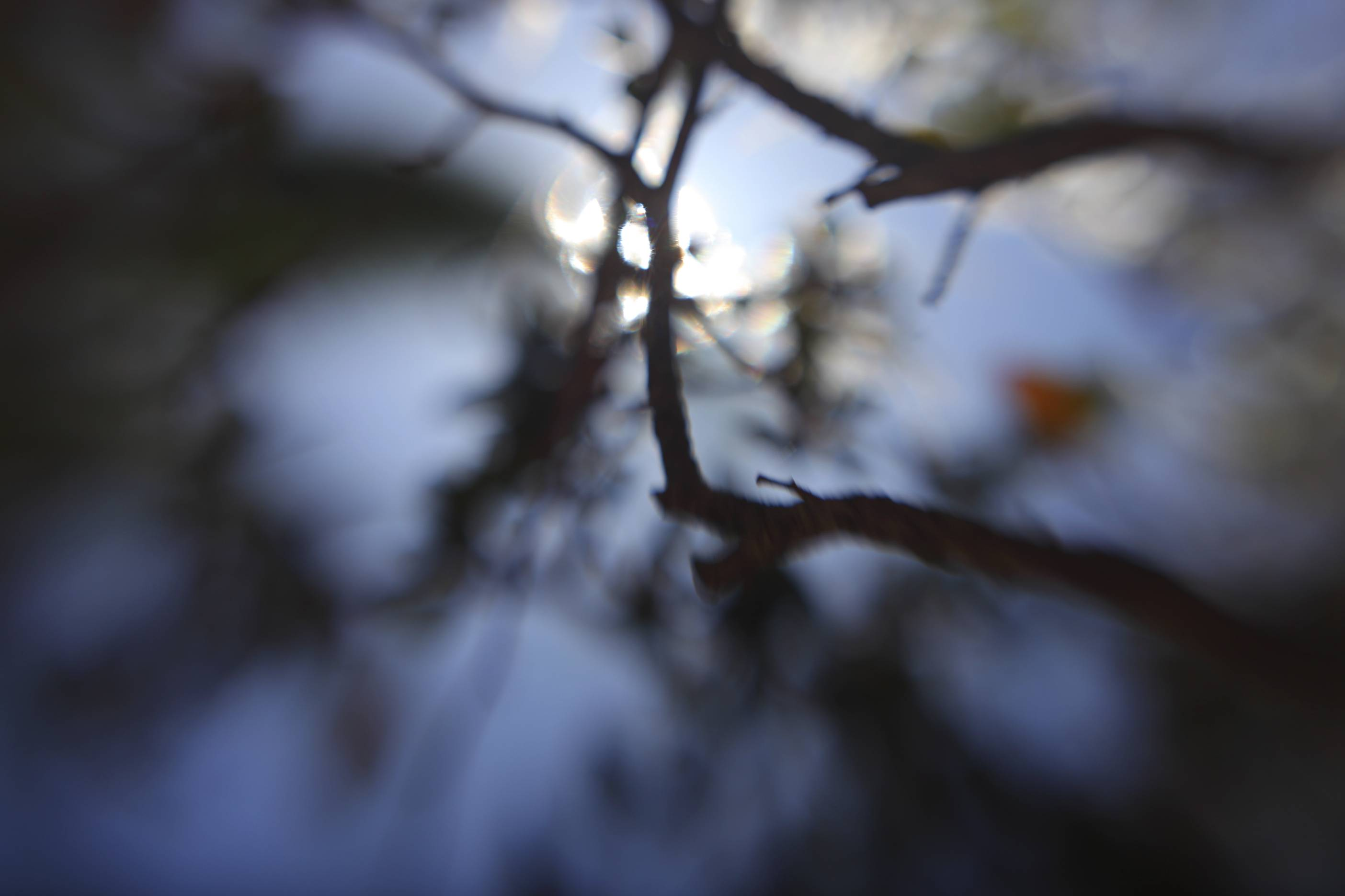 CH's Picture of the Day: Forest  [Day 303]