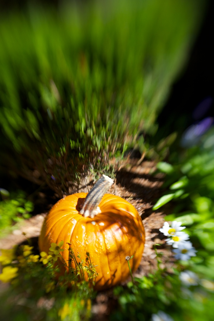 CH's Picture of the Day: Happy Halloween [Day 304]