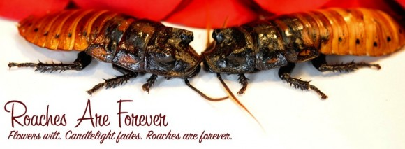 If You Love Somebody, Name a Cockroach After Them [NERD LURVE WEEK]