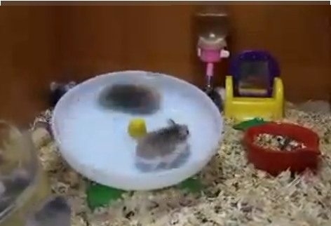 Go Hamsters [Procrastinate on This]