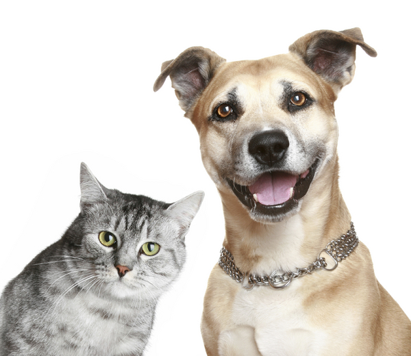 Cat and Dog — the Human Versions [Procrastinate on This]