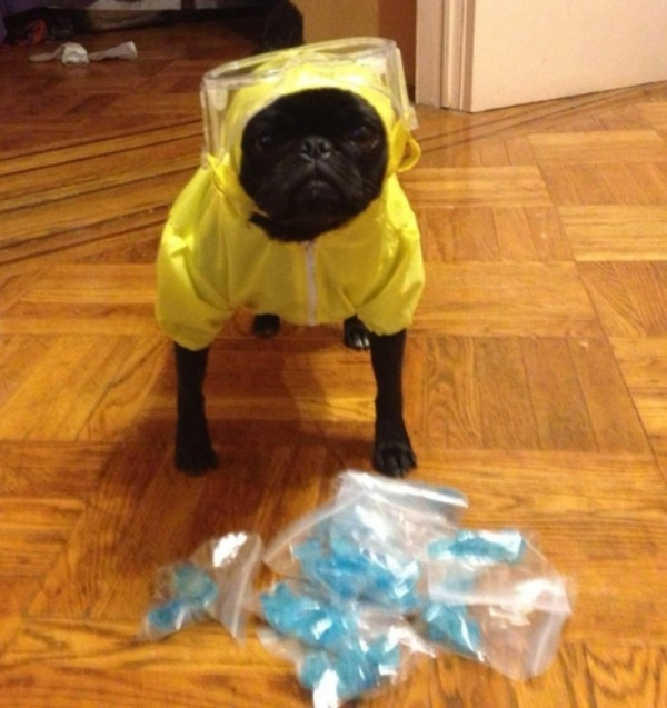 The Cutest Meth Dealer in All the Land [One More Thing Before We Go]